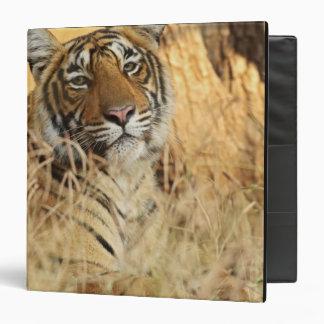 Portrait of Royal Bengal Tiger, Ranthambhor 3 Ring Binder