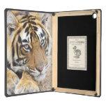 Portrait of Royal Bengal Tiger, Ranthambhor 4 iPad Air Cover
