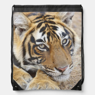 Portrait of Royal Bengal Tiger, Ranthambhor 4 Drawstring Bag