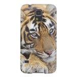 Portrait of Royal Bengal Tiger, Ranthambhor 4 Galaxy S5 Covers