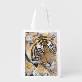 Portrait of Royal Bengal Tiger, Ranthambhor 4 Grocery Bag