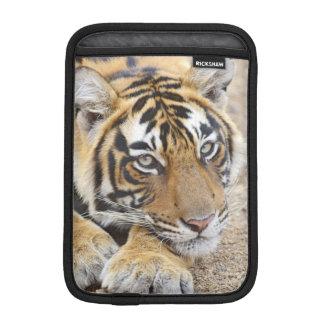 Portrait of Royal Bengal Tiger, Ranthambhor 4 iPad Mini Sleeves