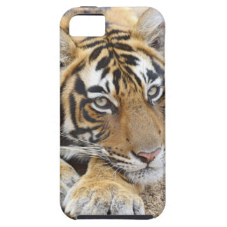 Portrait of Royal Bengal Tiger, Ranthambhor 4 iPhone SE/5/5s Case