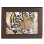 Portrait of Royal Bengal Tiger, Ranthambhor 4 Keepsake Box