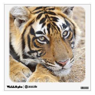 Portrait of Royal Bengal Tiger, Ranthambhor 4 Wall Sticker