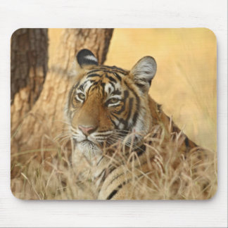 Portrait of Royal Bengal Tiger, Ranthambhor 5 Mouse Pad