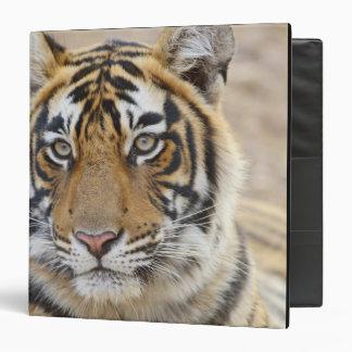 Portrait of Royal Bengal Tiger, Ranthambhor 6 Binder