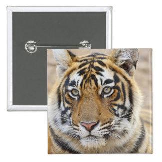 Portrait of Royal Bengal Tiger, Ranthambhor 6 Button