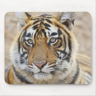 Portrait of Royal Bengal Tiger, Ranthambhor 6 Mouse Pad