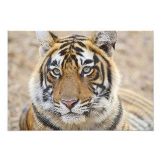Portrait of Royal Bengal Tiger, Ranthambhor 6 Photograph
