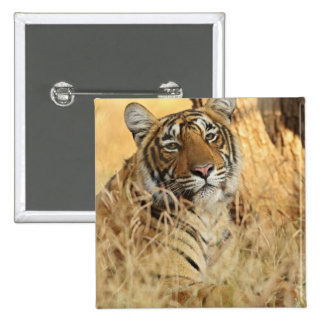 Portrait of Royal Bengal Tiger, Ranthambhor 2 Inch Square Button