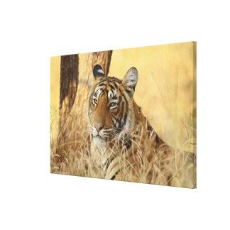 Portrait of Royal Bengal Tiger, Ranthambhor Canvas Print