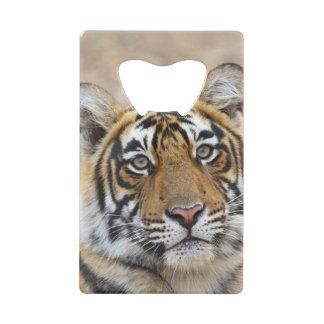 Portrait of Royal Bengal Tiger, Ranthambhor Credit Card Bottle Opener