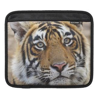 Portrait of Royal Bengal Tiger, Ranthambhor Sleeves For iPads