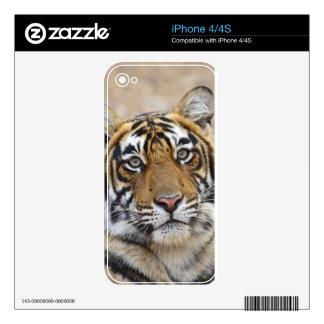 Portrait of Royal Bengal Tiger, Ranthambhor iPhone 4 Decal