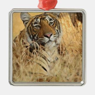 Portrait of Royal Bengal Tiger, Ranthambhor Metal Ornament