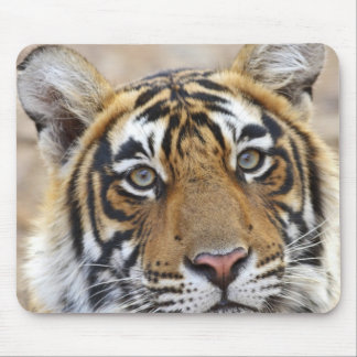 Portrait of Royal Bengal Tiger, Ranthambhor Mouse Pad