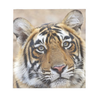 Portrait of Royal Bengal Tiger, Ranthambhor Notepad