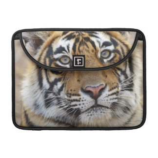 Portrait of Royal Bengal Tiger, Ranthambhor Sleeve For MacBook Pro