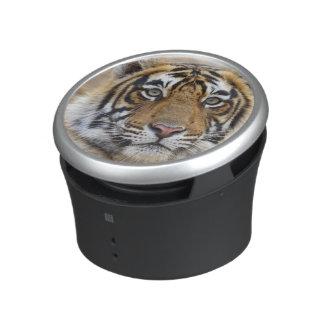 Portrait of Royal Bengal Tiger, Ranthambhor Speaker
