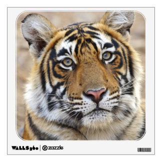 Portrait of Royal Bengal Tiger, Ranthambhor Wall Decal
