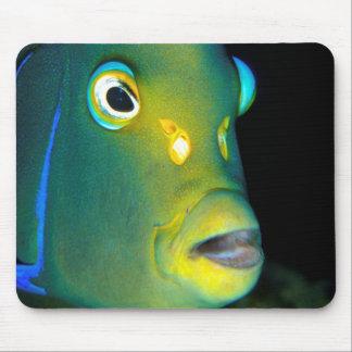 Portrait Of Semicircle Angelfish, Sodwana Bay Mousepads