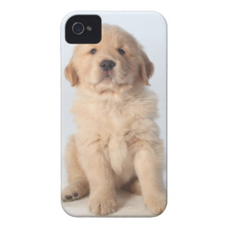 Portrait of six week old golden retriever puppy iPhone 4 case