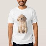 Portrait of six week old golden retriever puppy. shirts
