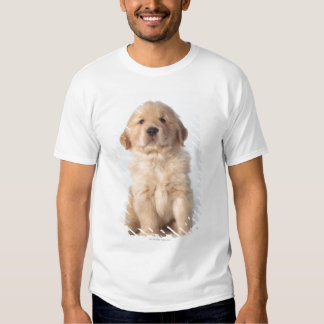 Portrait of six week old golden retriever puppy. shirts