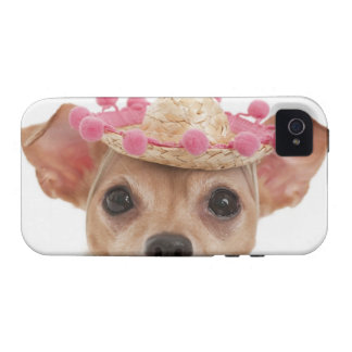 Portrait of small dog in sombrero iPhone 4 case