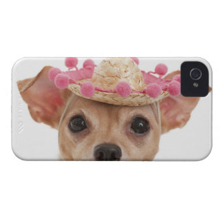 Portrait of small dog in sombrero iPhone 4 cover