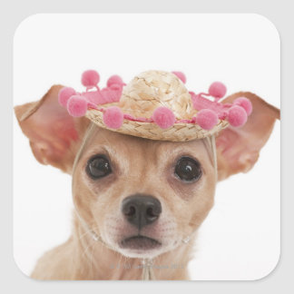 Portrait of small dog in sombrero square sticker