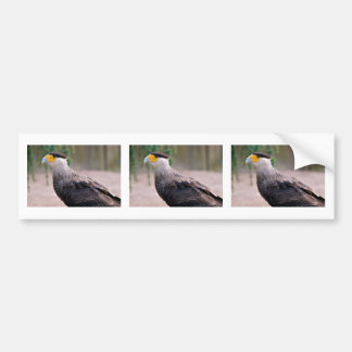 Portrait of Southern Crested Caracara Bumper Sticker