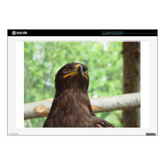 Portrait of steppe eagle laptop decal