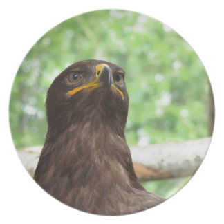 Portrait of steppe eagle plate