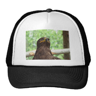 Portrait of steppe eagle trucker hat