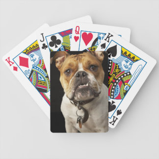 Portrait of tan and white bulldog with collar bicycle playing cards