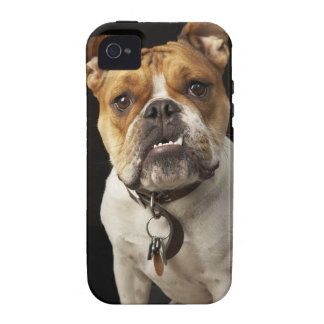 Portrait of tan and white bulldog with collar iPhone 4 covers
