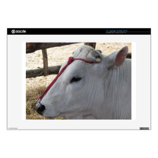 Portrait of the Chianina, italian breed of cattle Laptop Skins