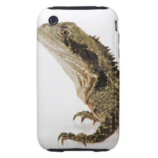 Portrait of this arboreal agamid species native iPhone 3 tough cover