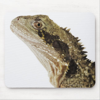 Portrait of this arboreal agamid species native mouse pad