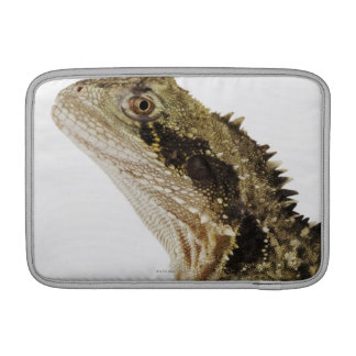Portrait of this arboreal agamid species native sleeve for MacBook air