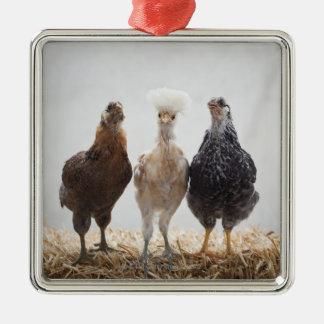 Portrait of Three Pet Chickens Looking Forward Metal Ornament