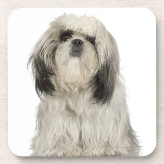 Portrait of Tibetan Terrier puppy Beverage Coaster