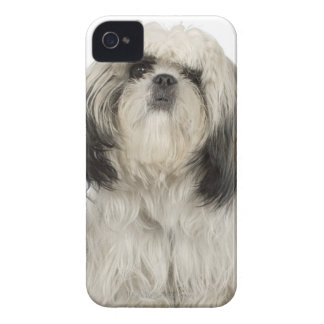 Portrait of Tibetan terrier puppy Case-Mate iPhone 4 Case