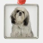 Portrait of Tibetan Terrier puppy Ornament