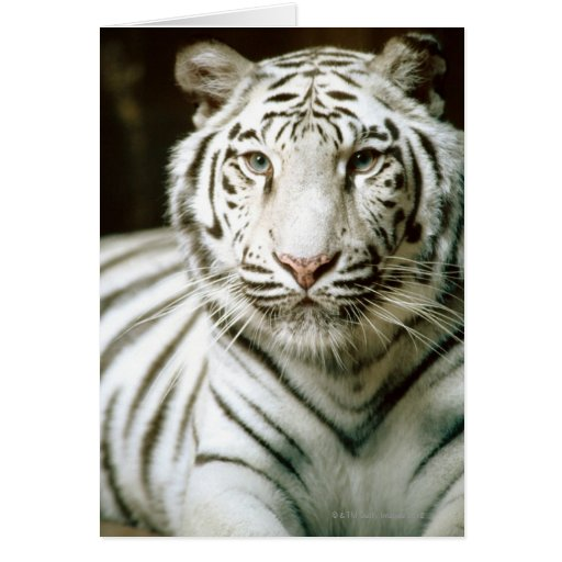 Portrait of tiger greeting card