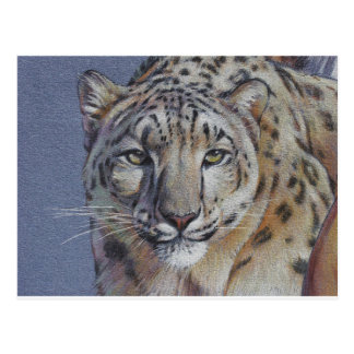 Portrait of Tiger Head Postcard