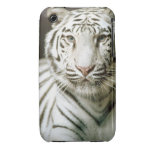 Portrait of tiger iPhone 3 cover