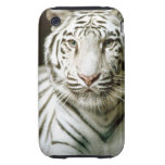 Portrait of tiger iPhone 3 tough cover